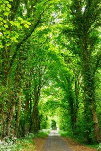 Tree Service in Kent